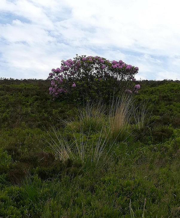 Haworth Moors, June 2018