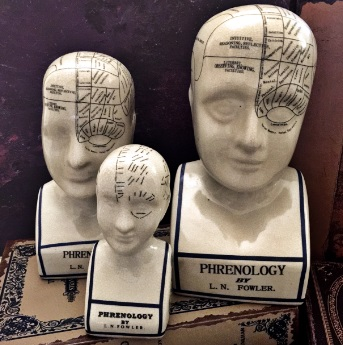 Cabinet Of Curiosities phrenology