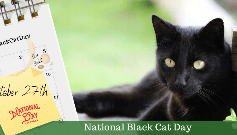 The Brontës And National Black Cat Day