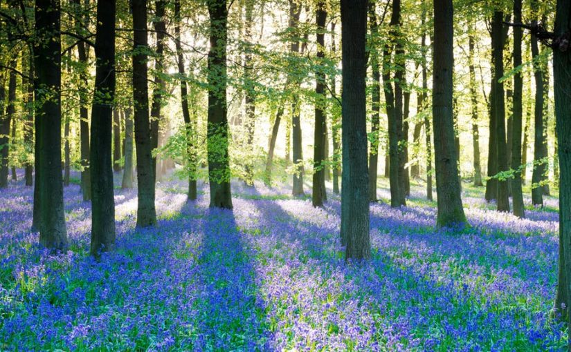 Brontë Music: The Bluebell by Charlie Rauh
