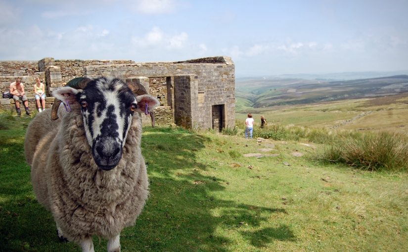 Animals In The Novels Of Anne And Emily Brontë